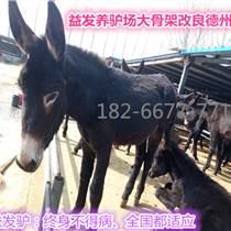貴州魯西肉牛養殖