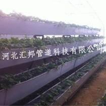 采摘園草莓立體種植槽