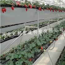 草莓基質栽培立體種植槽