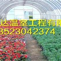 焦作花卉溫室建造技術溫室大棚建造材料供應商