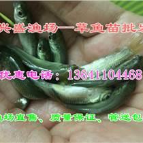 放生魚苗出售、聯系就選興盛漁場