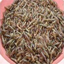現在安徽蚌埠龍蝦苗多少錢一斤有多少個