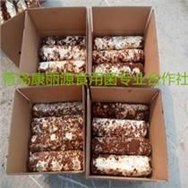 山東食用菌香菇菌棒2kg808
