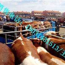 西門塔爾牛供應畜牧行業領先