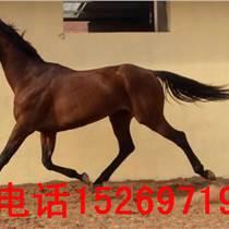 中国养马场销售价格实惠