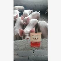 豬吃什么催肥快--白金肽肥豬專用--特價