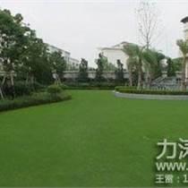 供应广西全区庭院草坪,绿色环保,质量更优