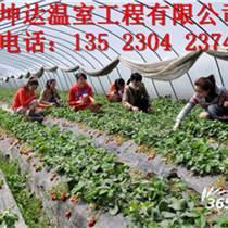 大同草莓大棚建設價格優質草莓大棚建設標準
