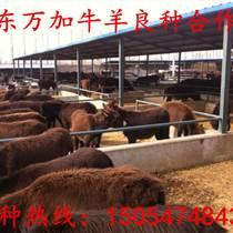 曲靖肉驢的養殖