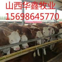 新疆肉牛價格 新疆肉牛多少錢
