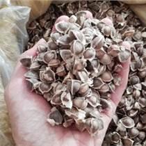 辣木籽進口代理清關公司,辣木籽進口關稅,印度辣木籽快件免稅進口清關