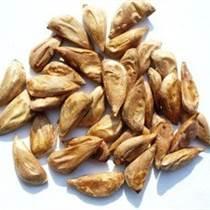 雪松種子進口清關,雪松種子進口手續,雪松種子進口關稅,雪松種子進口要哪些手續
