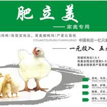 那個廠家的好肉雞促生長添加劑雞促長用的促長劑