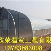 草莓無立柱大棚專業建造晉城幾字鋼拱棚建設案例