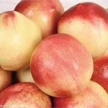 陜西油桃產地價格油桃批發基地