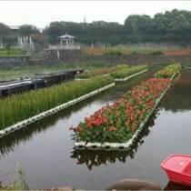 挺水植物,荷美轩,白洋淀挺水植物