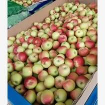 陕西噶啦苹果基地噶啦苹果价格噶啦苹果批发