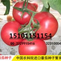 進口番茄種子,優質番茄種子價格,進口番茄種子供應
