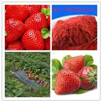 草莓粉 廠家批發 草莓果汁粉 草莓速溶粉