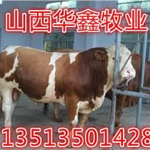 黃南養殖肉牛掙錢嗎哪家強