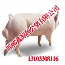 安陽種豬精液配送|安陽種豬精液配送廠家|鑫源種公豬
