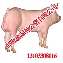 安陽優質種豬精液|安陽優質種豬精液價格|鑫源種公豬