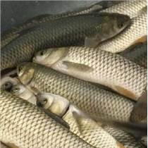 【直銷淡水魚】》求購草魚苗》鯉魚魚苗價格》鯽魚苗批發等