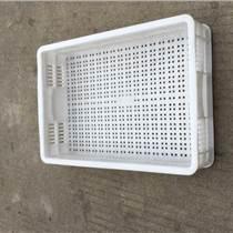 塑料筷子筐,臨沂筷子筐,塑料冷凍筐