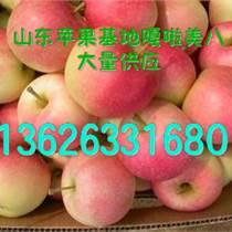 山东芋头产地在哪里芋头产地批发价格多少钱一斤