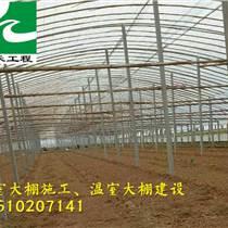 溫室工程   立柱拱棚建設