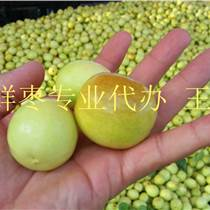 8月山東鮮棗產地批發價格