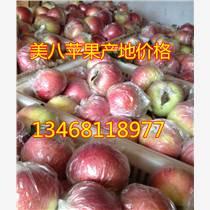 山东嘎拉苹果价格/山东美八苹果价格/山东苹果价格