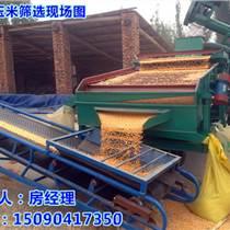 小麥去赤霉病粒供應哪家專業