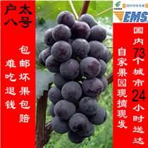 陕西西安特产新鲜户太八号葡萄全国邮寄