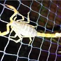 室内养殖蝎子|养殖蝎子|毒蝎养殖发展中心(图)