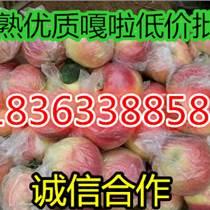 供應70以上精品嘎啦美八特價批發蘋果