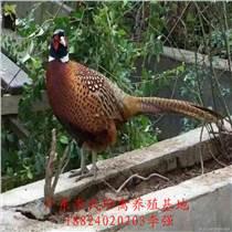 廣東李氏珍禽廠家直供山雞苗