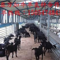 肉牛養殖國家補貼