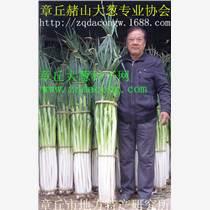 山東大蔥種子 章丘大梧桐 高產新品種家祿二號 中華巨蔥 家祿巨白 章丘大蔥種子