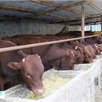 利木贊牛的市價