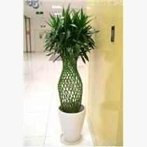 天津南開區花卉銷售公司天津南開區花卉租擺公司