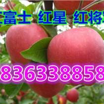 山東紅富士蘋果價格穩步上漲 紅富士蘋果產地批發市場行情