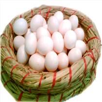 出售鸽子蛋/新鲜的鸽子蛋价格/鸽子蛋批发