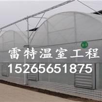 供應連體溫室大棚 連體蔬菜大棚廠家 型號齊全