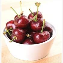鈣果樹苗主要品種: 農大7-8-9號鈣果樹苗。鈣果樹