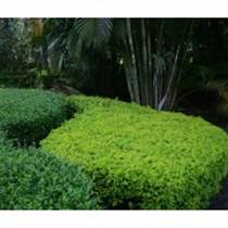 上海绿化苗木有哪些种类?具体价格多少?