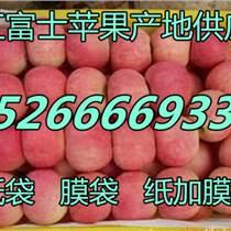 福建漳州紅富士蘋果價格