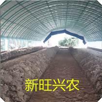 沧州新旺兴农养殖大棚供应量大从优