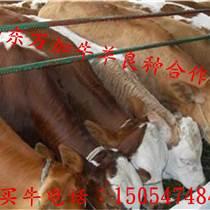 寶雞養一頭牛能賺多少錢