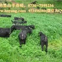 牧草種植養殖黑山羊技術